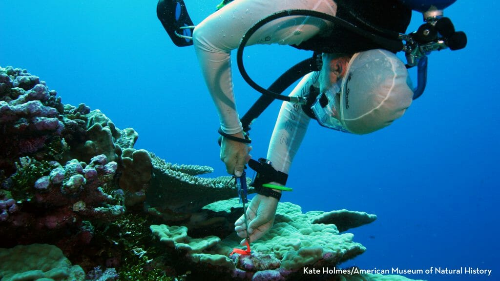 2016 CCST Science & Technology Policy Fellow Dan Brumbaugh removes a coral settlement plate at Palmyra Atoll while a researcher with the American Museum of Natural History and its Center for Biodiversity & Conservation. (Image courtesy of Kate Holmes/CBC/AMNH)
