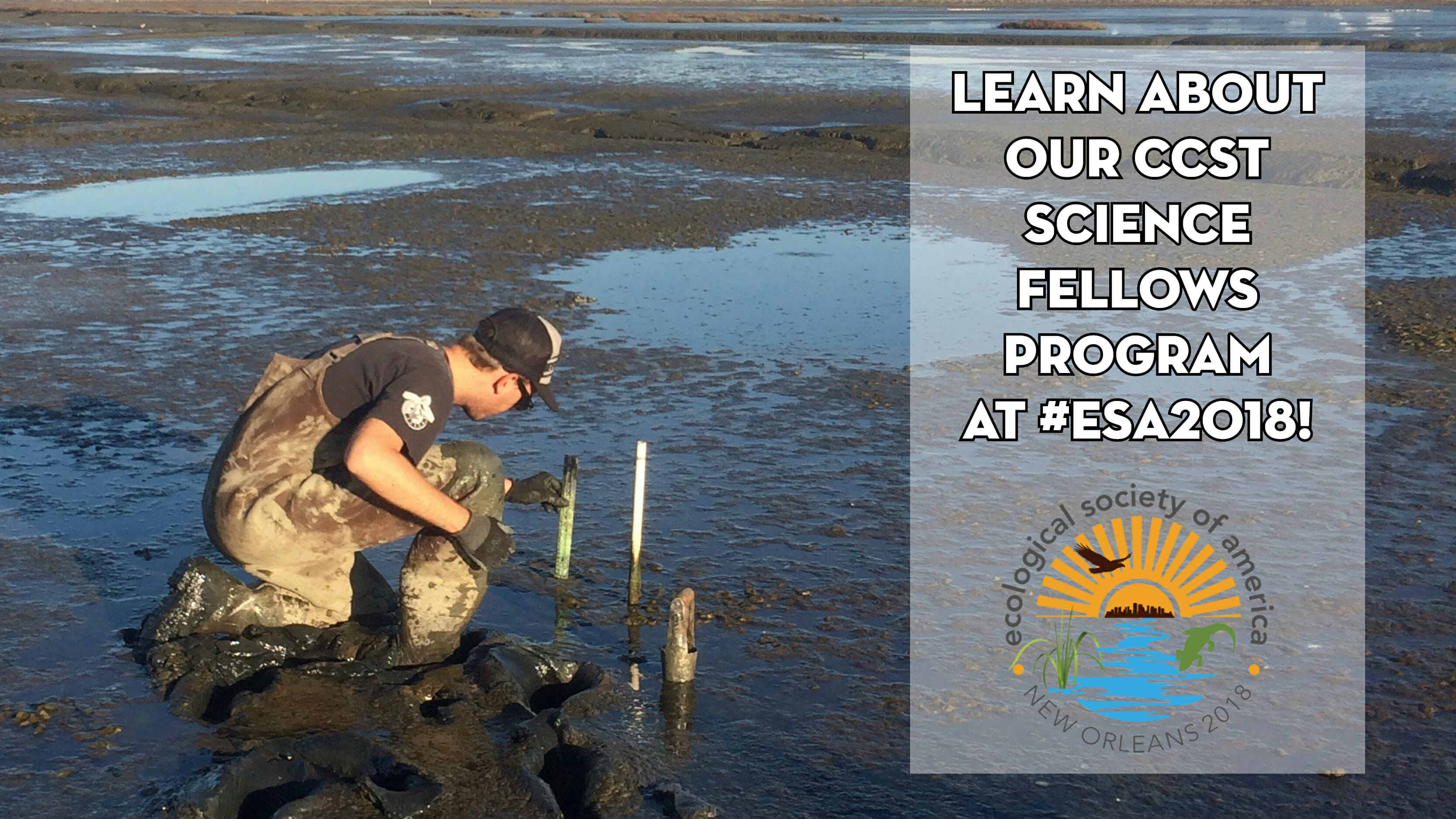 Graphic showing scientist Dylan Chapple sampling a San Francisco Bay salt marsh.