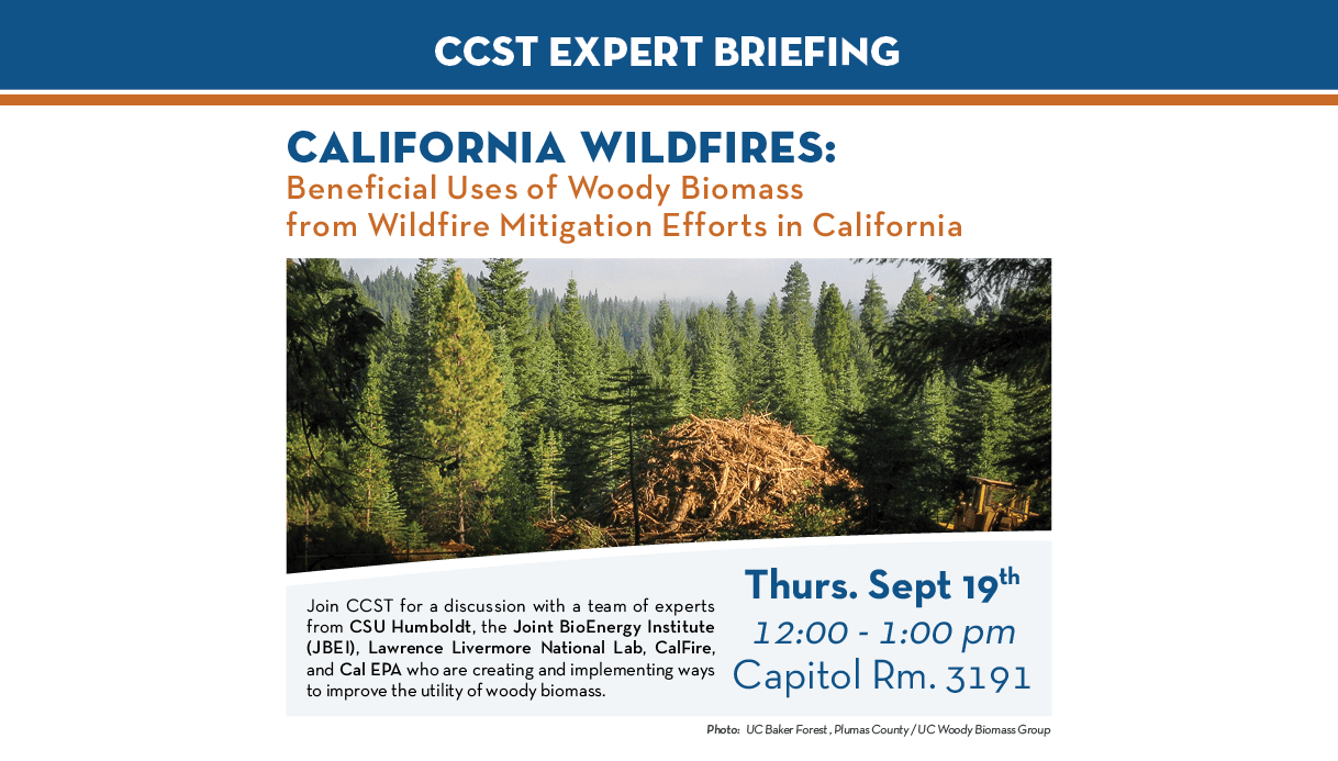 Biomass Briefing Flyer Sept 2019